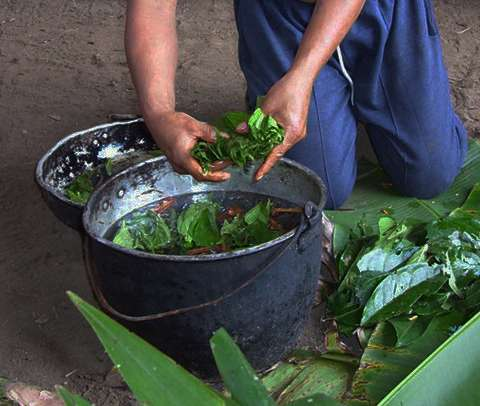 The Ayahuasca Diet and Dietary Guidelines
