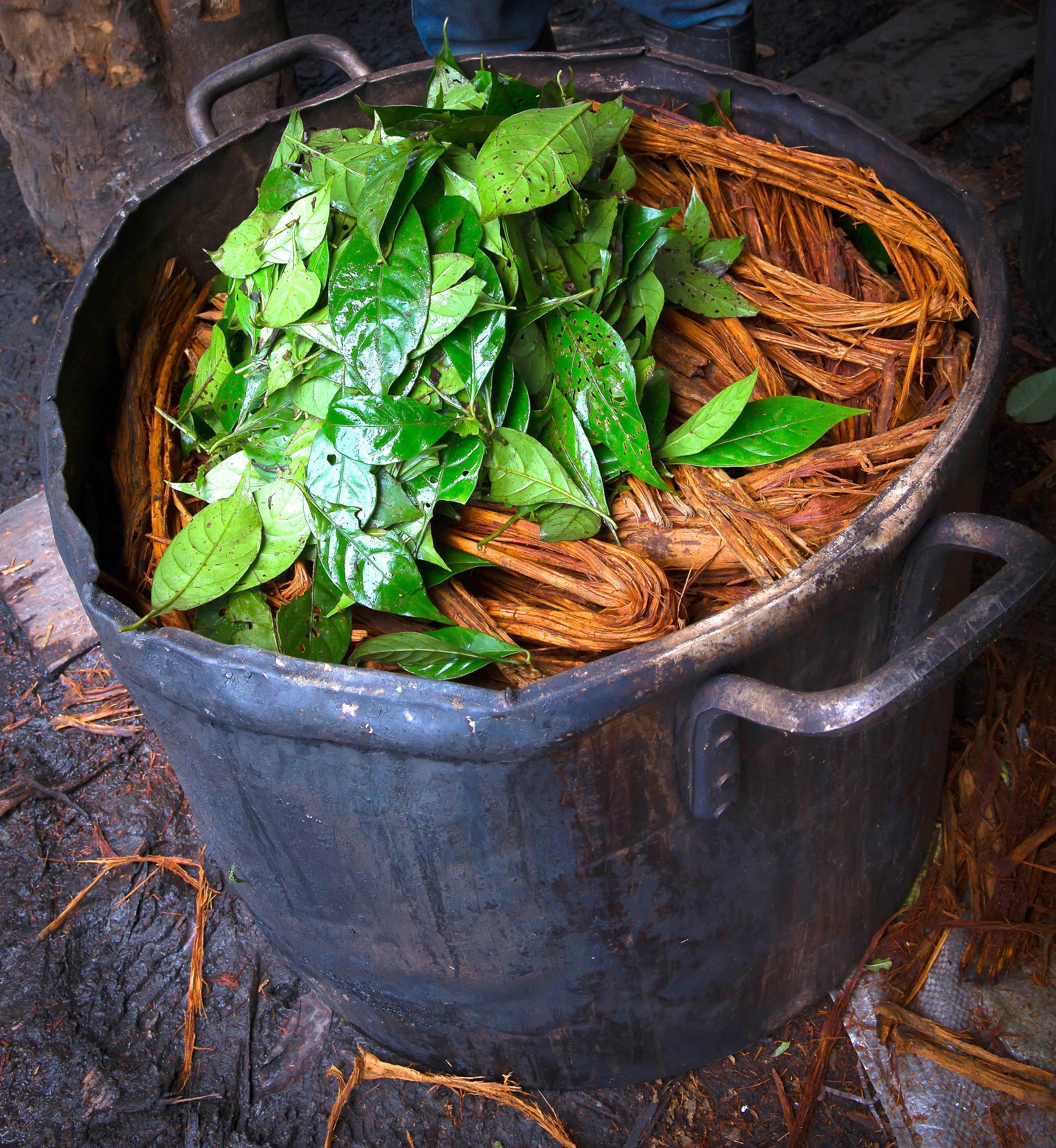 ayahuasca preparation guide